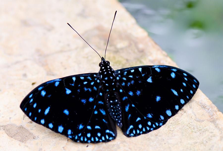 Tropische Schmetterlinge im Botanischen Garten München : Zauber des Lichts